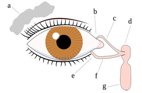 目の周辺器官の名前