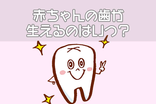 赤ちゃんの歯が生え始るのはいつ?